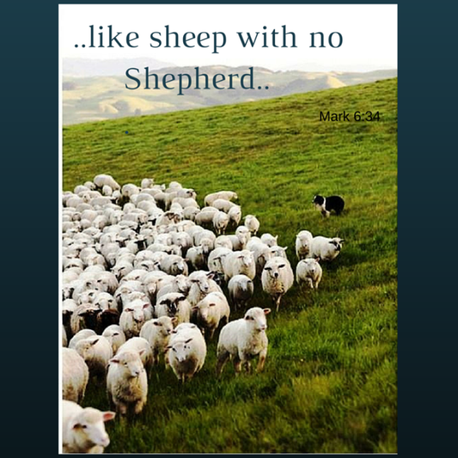 Sheep and sheep dog 11141224_509943375831037_2475801868731134127_n